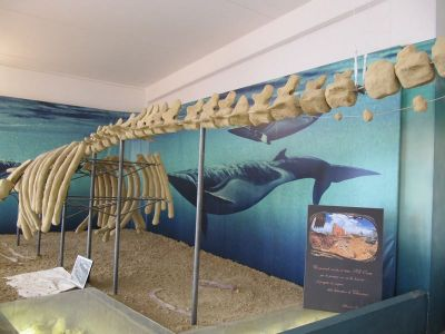 Ric Fossili Porta